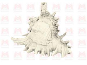 Fichier 3D / Coquillage modèle Murex Rameux