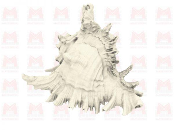 Fichier 3D coquillage murex